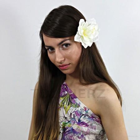 AB-224 Haarblüte, Haarblume Amaryllis in perlweiß, Ø ca. 11 cm, Höhe ca. 5 cm